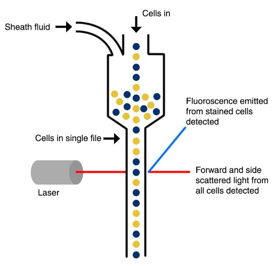 Immunophenotyping